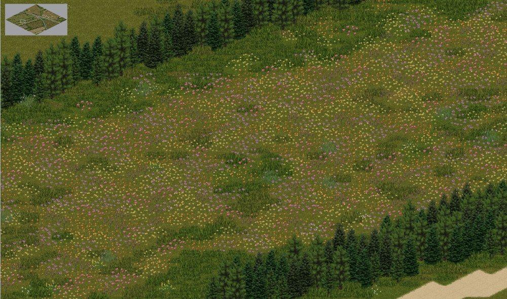 flower fields.jpg